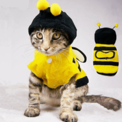 cat in bee costume
