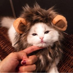 cat lion costume