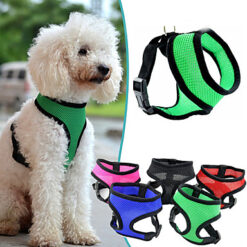 leashes-collars-harnesses