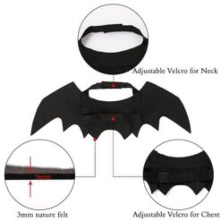 bat wings for a cat